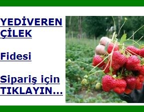 cilek_siparis.jpg