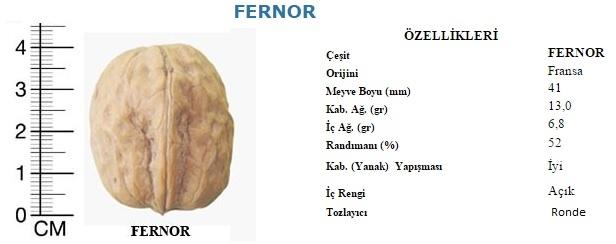 fernor_ceviz_5.jpg