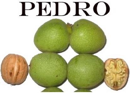 pedro_ceviz_1.jpg