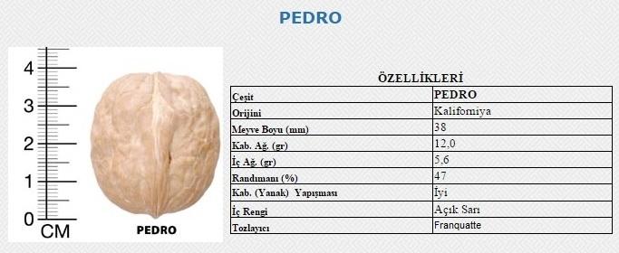 pedro_ceviz_21.jpg