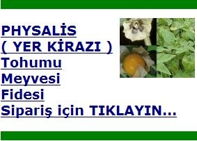 physalis_yer_kirazi.jpg
