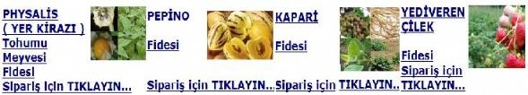 yerkirazi_pepino_kapari_cilek.jpg
